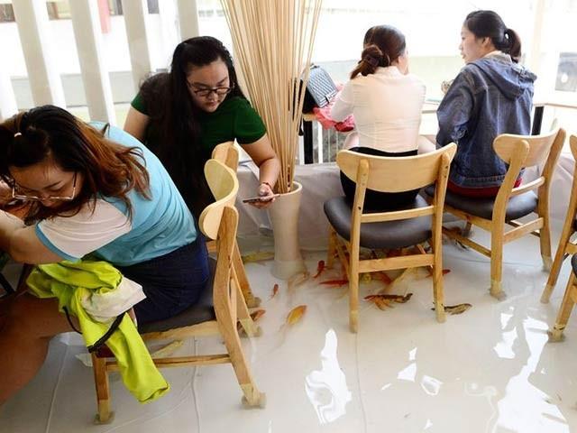 ویت نام کا سیلابی ریستوران جہاں آپ مچھلیوں کے ساتھ کافی پی سکتے ہیں (فوٹو: انٹرنیٹ)