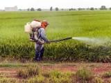 آرگینو فاسفیٹس پر مشتمل حشرات کش ادویہ حاملہ خواتین اور ان کے بچوں کے لیے انتہائی مضر قرار (فوٹو: فائل)