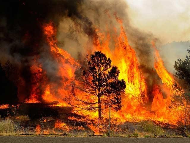 امریکی شخص ڈینس ڈکی کی ایک احمقانہ حرکت نے 45 ہزار ایکڑ جنگلات کو جلا کر راکھ کردیا (فوٹو: ایریزونا ٹائمز)