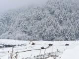 شدید برفباری کے باعث بند مرکزی شاہراہ کی بحالی کا کام جاری ہے۔ فوٹو : فائل