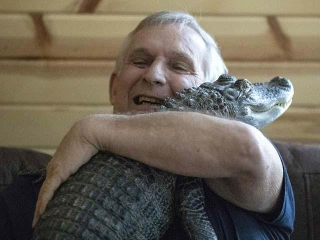 65 سالہ ہیننی مگرمچھ کو گلے لگانے کو ڈپریشن میں کمی کا باعث بتاتے ہیں (فوٹو : ٹویٹر)