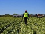 امریکی ماہرین نے کہا ہے کہ سردیوں کی شدت سے اگلی فصلوں پر منفی اثرات مرتب ہوسکتے ہیں۔ فوٹو: فائل