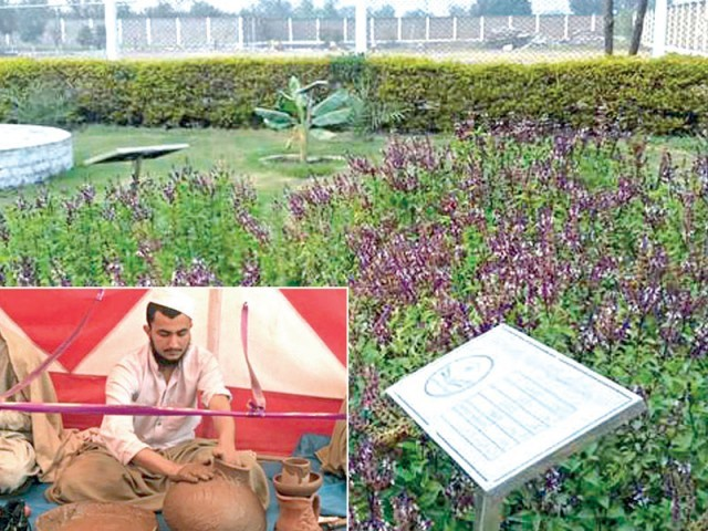 دینی درس گاہ جامعہ عثمانیہ کے زیراہتمام باغ میں وہ پودے اور درخت اگائے گئے ہیں جن کا ذکر قرآن مجید میں آیا ہے۔ فوٹو: فائل