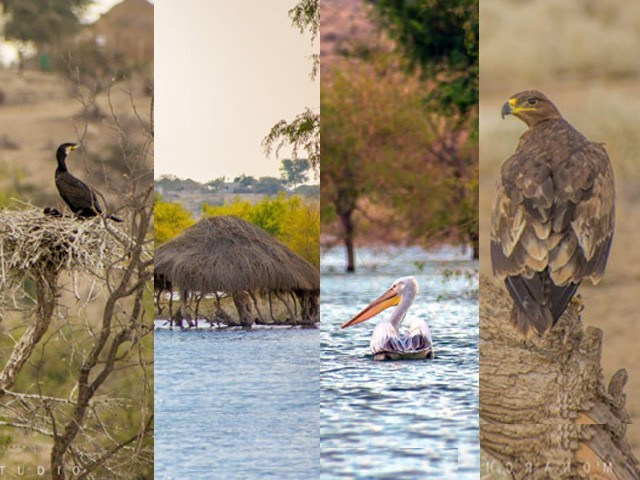 گورانو ڈیم پر لال سر، نیل کنٹھ، جل کوا، بلبل، بگلا، ٹٹیری، پدی اور دیگر پرندے دیکھے جاسکتے ہیں۔ فوٹو: بشکریہ شبینہ فراز