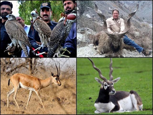 پنجاب میں جنگلی جانوروں کے تحفظ کیلئے مزید چار نیشنل پارکس بھی بنائے جائیں گے۔ (تصاویر بشکریہ بلاگر)