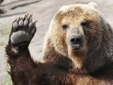 قازقستان کی جیل میں کاٹیا واحد جانور ہے جسے انسانوں کے ساتھ قید میں رکھا گیا ہے (فوٹو: فائل)