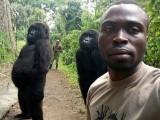 کانگو کے نیشنل پارک میں پائے جانے والے گوریلا بھی سیلفی کے شوقین ہوگئےہیں۔ فوٹو: بشکریہ بورڈ پانڈا