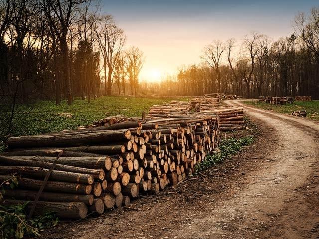 دنیا بھر میں گزشتہ برس کروڑ 20 لاکھ ہیکٹر درخت تباہ ہوئے جس میں 36 لاکھ ہیکٹر بنیادی بارانی جنگلات (رین فاریسٹ) تھے (فوٹو: فائل)