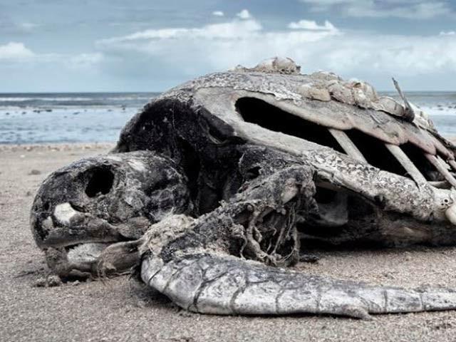 اقوامِ متحدہ کی رپورٹ میں کہا گیا ہے کہ انسانی سرگرمیوں سے جاندار اور قدرتی ماحول تیزی سے تباہ ہورہا ہے۔ فوٹو: فائل
