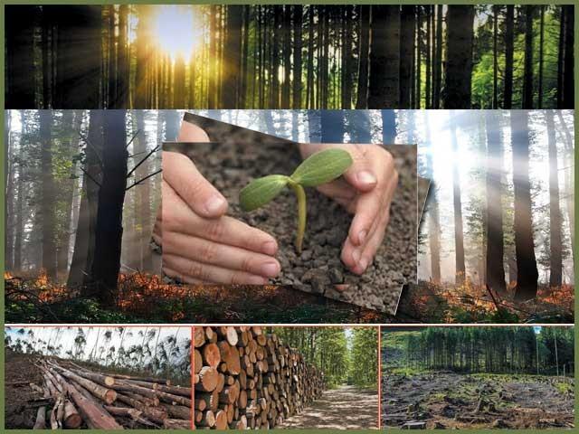 وزیراعظم کی جنگلات بڑھانے میں غیر معمولی دلچسپی کے باوجود انہی کی حکومت کے ہاتھوں شجرکاری کے بہترین منصوبے کو تباہ کروایا جا رہا ہے ۔ فوٹو: فائل
