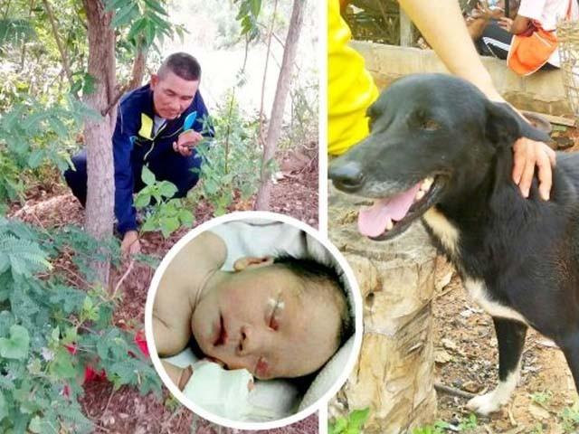 کتے نے مٹی میں دبے نومولود بچے کی اطلاع اپنے مالک کو دی۔ فوٹو : ٹویٹر