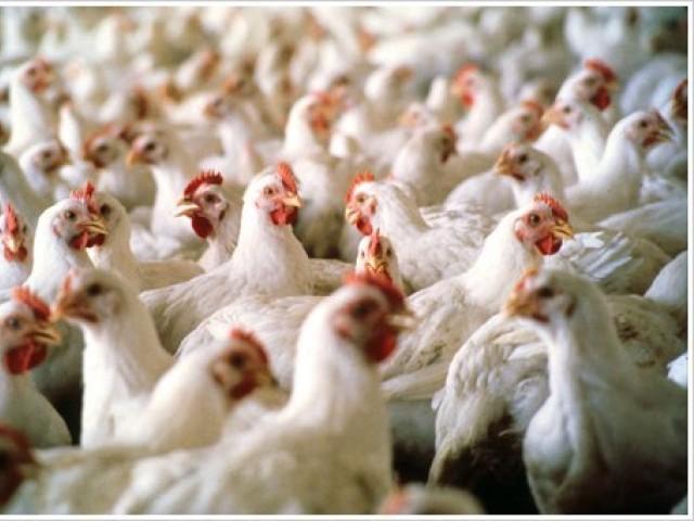 آئندہ مالی سال کے دوران ملک میں غذائی تحفظ کے منصوبوں کیلیے مجموعی طور پر 12ارب 4کروڑ روپے مختص کرنے کی تجویز ہے۔ فوٹو:فائل