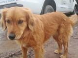 ارجنٹینا کے ایک پولیس اسٹیشن کے باہر موجود یہ کتیا ایک سال سے اپنے مالک کی منتظر ہے۔ فوٹو: اوڈٹی سینٹرل