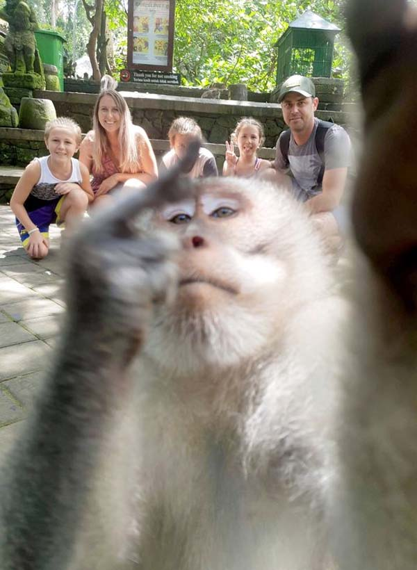 Monkey takes Selfie 2