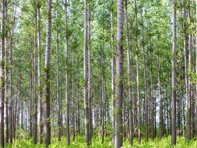 ایک تحقیقی رپورٹ میں کہا گیا ہے کہ دو ارب سے زائد درخت لگا کر انہیں برقرار رکھا جائے تو دنیا سے کاربن ڈائی آکسائیڈ کی دوتہائی مقدار ختم کی جاسکتی ہے۔ فوٹو: فائل