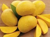 آم کئی غذائی اجزا اور صحت کے لیے انتہائی مفید اجزا سے بھرپور ہوتا ہے۔ فوٹو: فائل