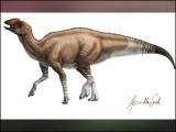 یہ ڈائنوسار غالباً آج سے 8 کروڑ سال پہلے ڈیلٹا کے علاقے میں پایا جاتا تھا۔ (فوٹو: یوریکا الرٹ)