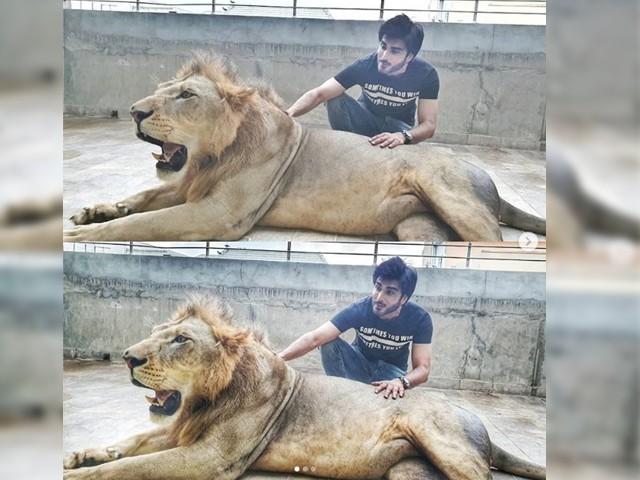 ببر شیر کا نام سمبا ہے جسے ایک دن کے لئے گھر لایا گیا ہے، عمران عباس (فوٹو: فائل)