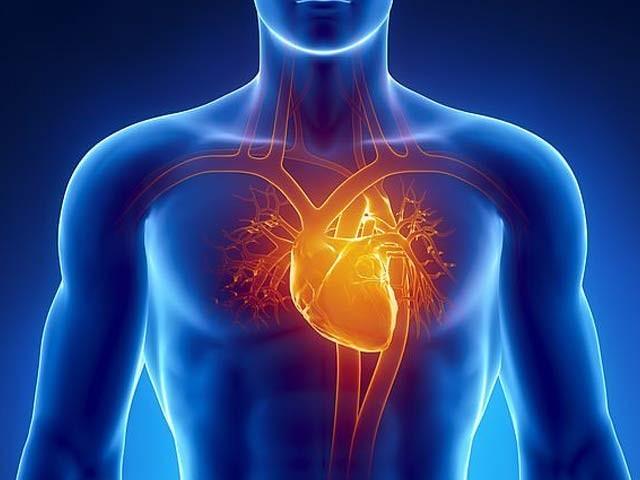 یونیورسٹی آف کیلگری کے ماہرین نے دل کے پاس ہی جی اے ٹی اے سکس پلس خلیات دریافت کئے ہیں جو بڑی حد تک دل کی مرمت کرسکتے ہیں۔ فوٹو: فائل