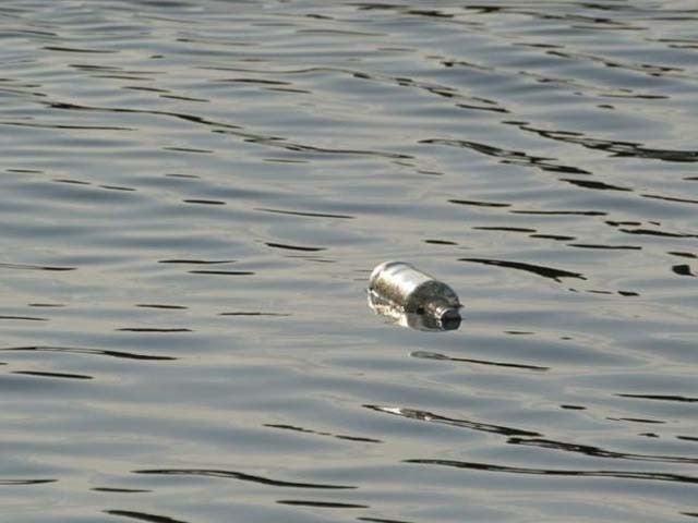 21 سال قبل ایک نوجوان نے اس بوتل کو ویلز کے ساحلوں کی نذر کیا تھا۔ فوٹو : ٹویٹر