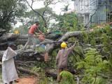 زیادہ تر ہلاکتیں درختوں اور ہورڈنگز گرنے کے باعث ہوئیں، فوٹو : فائل