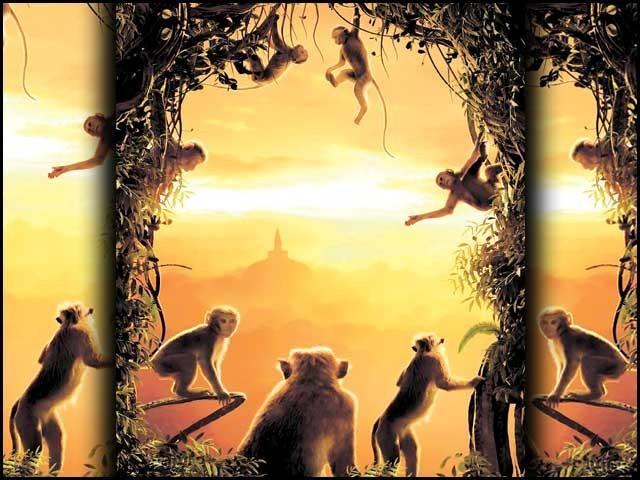 ان بندروں نے جب انسانوں کا حال دیکھا ہوگا تو طنزاً کہا ہوگا،''کہو میاں!۔۔۔۔کیا پایا انساں ہوکے۔'' فوٹو: فائل