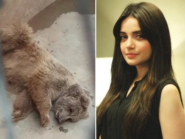 اللہ کی مخلوق مر رہی ہے اس لیے ہم خاموش نہیں بیٹھ سکتے، پاکستانی اداکارہ (فوٹو: فائل)