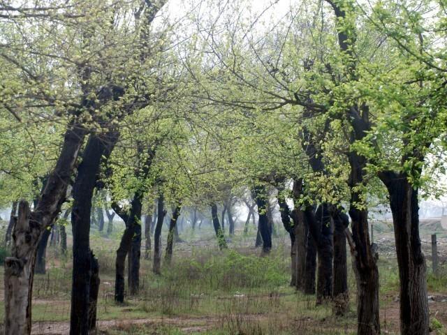 اینگرو پاورجین اور تھرفاؤنڈیشن تھرپارکر میں ایک لاکھ درخت لگائیں گے