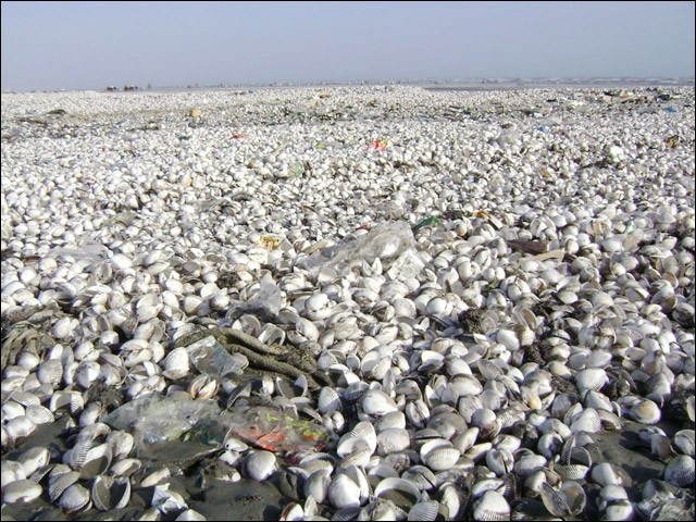 سمندر ڈیلٹا کی زمین کے بہت بڑے حصے کو نگل چکا ہے۔ (تصاویر: بلاگر)