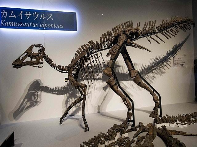 جاپانی سائنس دانوں نے ڈائنوسار کی اس نئی قسم کو 'کامو سائورس جاپونیکس' کا نام دیا ہے۔ فوٹو : جاپانی میڈیا