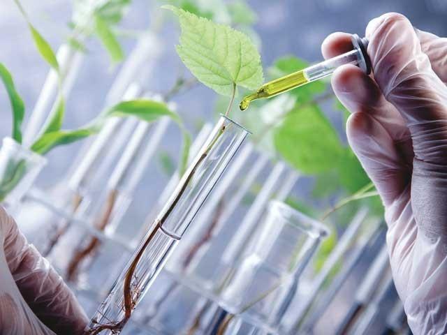چینی سائنس داں جینیاتی تدوین کی حامل جدید ٹیکنالوجی کرسپر (CRISPR) کے ذریعے امراض کے خلاف مزاحمت رکھنے والی فصلوں پر تحقیق کررہے ہیں