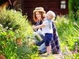 باغبانی سے دماغی اور ذہنی صحت پر اچھے اثرات مرتب ہوتے ہیں۔ فوٹو: فائل