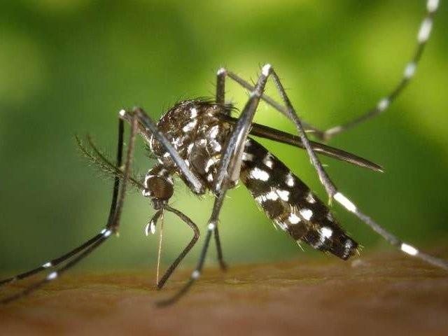 پشاور میں مزید 55 افراد میں ڈینگی وائرس کی تصدیق ہوئی ہے فوٹو: فائل