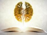 پڑھنے یا ریڈنگ کے عمل سے دماغ کے بصری حصے بھی مضبوط ہوتے ہیں۔ فوٹو: فائل
