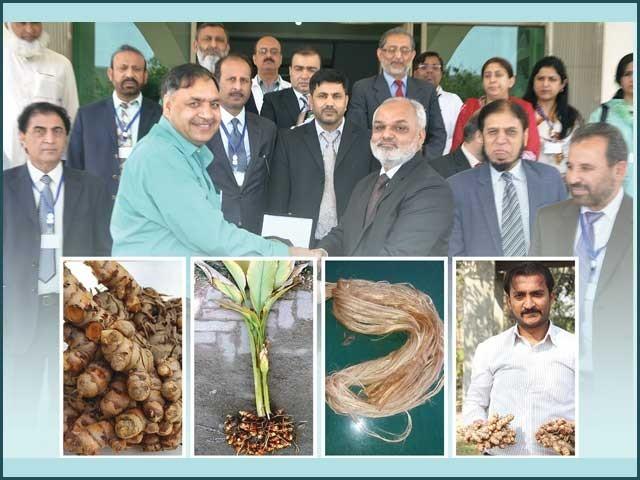 زیادہ پیداوار کی حامل 33 فصلوں کی تیاری کا عظیم کارنامہ