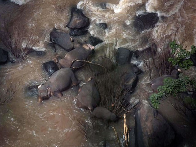 Elephant fall unto waterfall 2