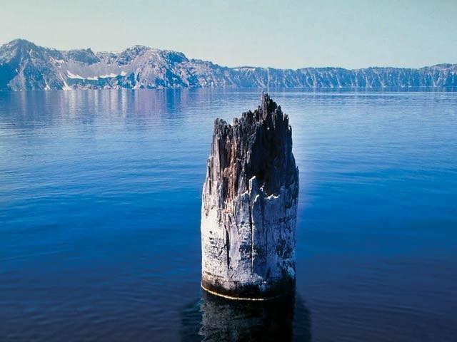 اوریگون کی ایک جھیل میں درخت کا تنا 120 سال سے پانی میں عموداً موجود ہے اور اب بھی حرکت کررہا ہے۔ فوٹو: اوڈٹی سینٹرل