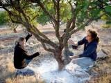 یونان کے جزیرے پر ایک قسم کے درخت ماسٹک کی خوشبودار اور شفابخش گوند صرف اسی علاقے میں پائی جاتی ہے (فوٹو: سی این این)