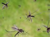 ماہرین نے مچھروں کے پروں کی بھنبھناہٹ کو دیکھتے ہوئے خاموش ڈرون بنائے جاسکتے ہیں۔ فوٹو: فائل
