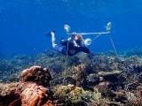 بین الاقوامی ٹیم نے لاؤڈ اسپیکر کے ذریعے مرجانی چٹانوں کو دوبارہ آباد اور بحال کرنے میں اہم پیش رفت حاصل کرلی (فوٹو: یونیورسٹی آف ایکسیٹر)