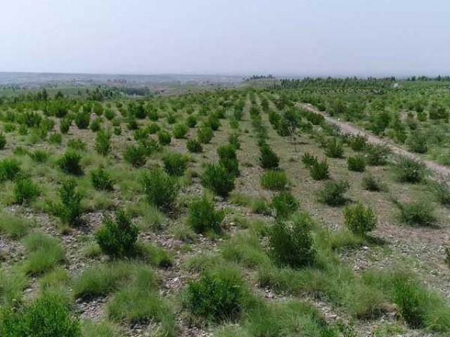 برسوں میں 10 ارب روپے کا تخمینہ ،پہلے مرحلے میں ساڑھے4 ارب پودے لگائے جائینگے