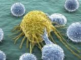بین الاقوامی ماہرین کی ٹیم نے نئے قسم کے امنیاتی خلیات دریافت کئے ہیں جو ہر طرح کے سرطان کا علاج کرسکتے ہیں۔ فوٹو: فائل