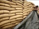 درآمدی گندم کی 20 فروری تک آمد کے امکانات ختم ہو گئے ہیں فوٹو: فائل