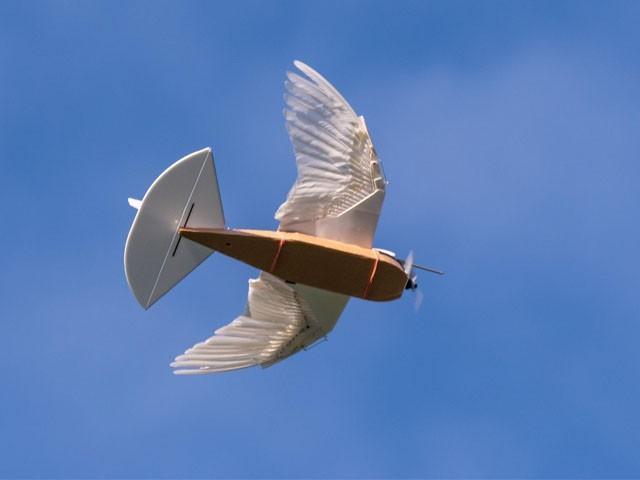 کبوتر روبوٹ کے بازوؤں میں اصلی پرندوں کا استعمال کیا گیا ہے، فوٹو : فائل