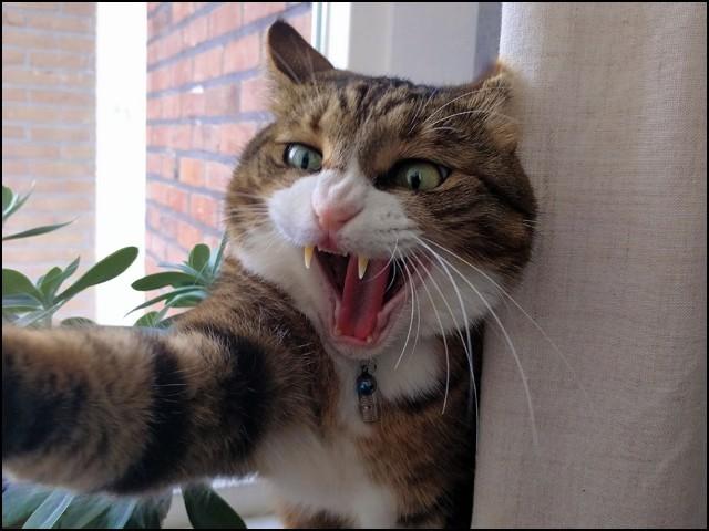 خاتون جب بھی باورچی خانے سے باہر نکلنے کی کوشش کرتیں، بلی فوراً ان پر حملہ کردیتی۔ (فوٹو: وکی میڈیا)