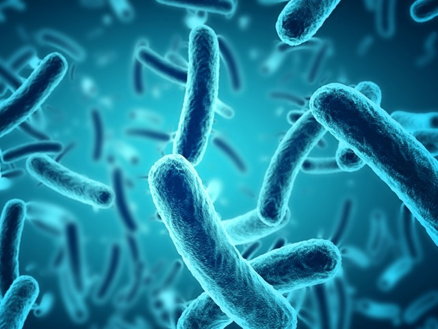 بیکٹیریا کو مارنے کے بجائے یہ دوائیں انہیں تقسیم ہوکر تعداد بڑھانے کے قابل ہی نہیں چھوڑتیں۔ (فوٹو: انٹرنیٹ)