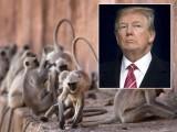 امریکی صدر ٹرمپ کے دورہ آگرہ کے موقع پر انہیں بندروں کے کسی ممکنہ حملے سے بچانے کے لیے غیرمعمولی اقدامات کئے گئے ہیں۔ فوٹو: فائل