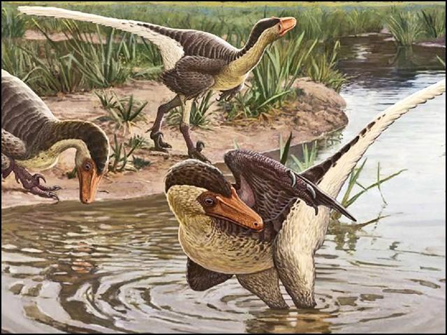 یہ ''دوڑنے والا شکاری پرندہ'' تھا، جو شاید اپنی جسامت سے کہیں بڑے جانوروں کا شکار بھی کرسکتا تھا۔ (فوٹو: نیچر سائنٹفک رپورٹس)