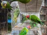 شہریوں کو پرندوں کیلئے خوراک اور دانے کا حصول مشکل بن گیا ہے فوٹو: فائل