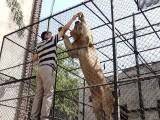 میاں ضیا محمود بوٹی کو جنگلی جانور پالنے کا جنون کی حد تک شوق ہے فوٹو: ایکسپریس